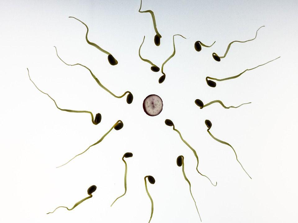 disegno con tanti spermi infertili